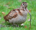 Η 3η Μαρτίου θεωρείται ως η Παγκόσμια Ημέρα Άγριας Ζωής. Μήπως απλά για να γεμίζουμε τα ημερολόγια επετείους;