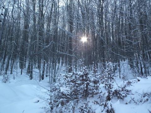 Απαγόρευση θήρας σε περίοδο χιονοπτώσεων