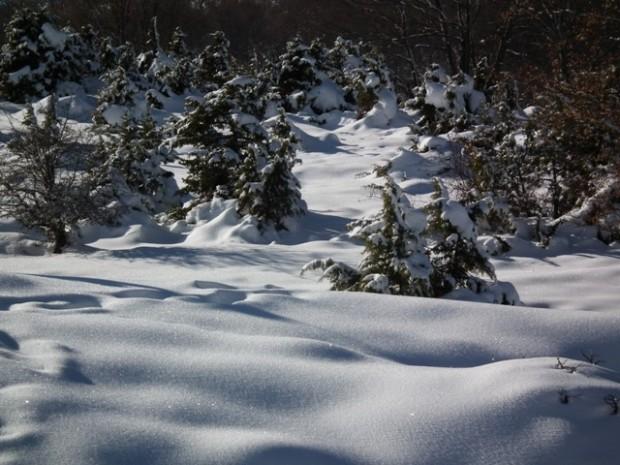 Χιονόπτωση και χιονόστρωση στη Βέροια