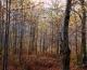 Χρήση του κυνηγότοπου: οι άγραφοι νόμοι του κυνηγιού που μπορούν να λύσουν πολλά προβλήματα