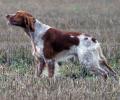 Έγγραφο της ΚΟΜΑΘ προς τους Κ. Σ. για τις υποχρεώσεις των ιδιοκτητών κυνηγετικών σκύλων