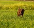 Δελτίο τύπου του Κ. Σ. Βέροιας σχετικά με την εκγύμναση σκύλων