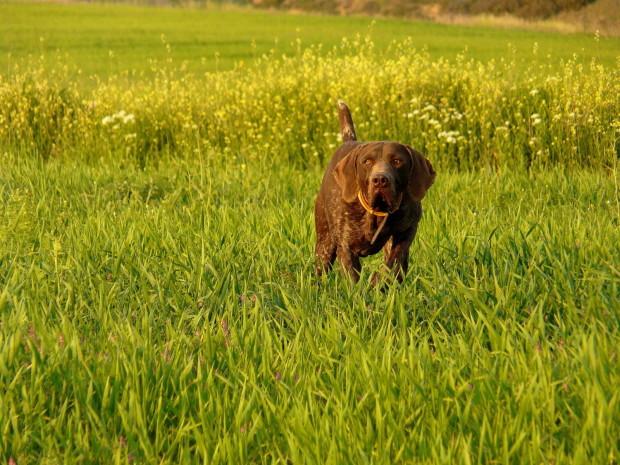 Καθορισμός όρων και προϋποθέσεων διεξαγωγής αγώνων κυνηγετικών ικανοτήτων σκύλων δεικτών και Ιχνηλατών.