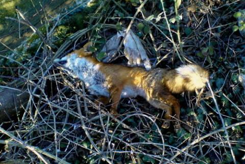 Ημερίδα για τη λύσσα από το Δήμο Βέροιας