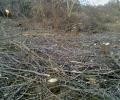 Καταστρέφεται με γοργούς ρυθμούς το παραποτάμιο δάσος του Αλιάκμονα