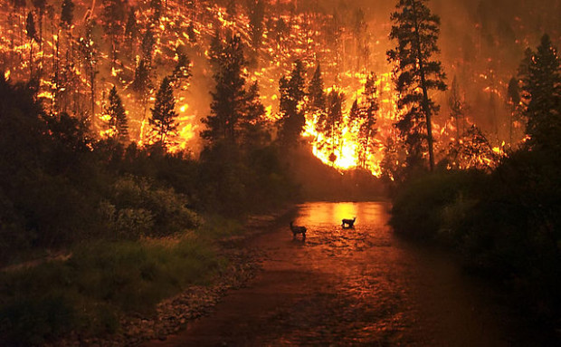 Νέα έρευνα της ΚΟΜΑΘ: οι επιπτώσεις των δασικών πυρκαγιών στη θήρα:μία περίπτωση σε μεσογειακό οικοσύστημα