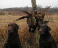 Εφαρμογή των διατάξεων του Ν.4039/2012 για την προστασία των κυνηγετικών σκύλων.