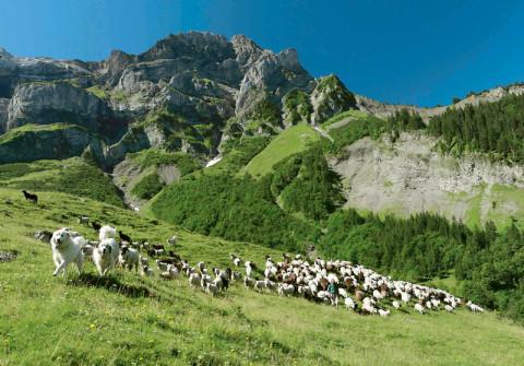 Το τέλος της ορεινής κτηνοτροφίας …