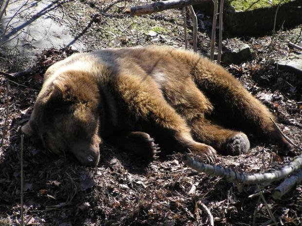 Μήνυση της Κυνηγετικής Ομοσπονδίας Μακεδονίας – Θράκης, για τη θανάτωση δύο αρκούδων στην Καστοριά