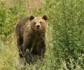 Εμφανίστηκαν (ξανά) αρκούδες στο Δήμο Βέροιας