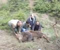 Επιτυχής διάσωση αρκούδας στο Ν. Κοζάνης
