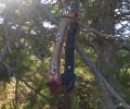 Βρέθηκε νεκρό κυνηγόσκυλο στην περιοχή της Κουμαριάς